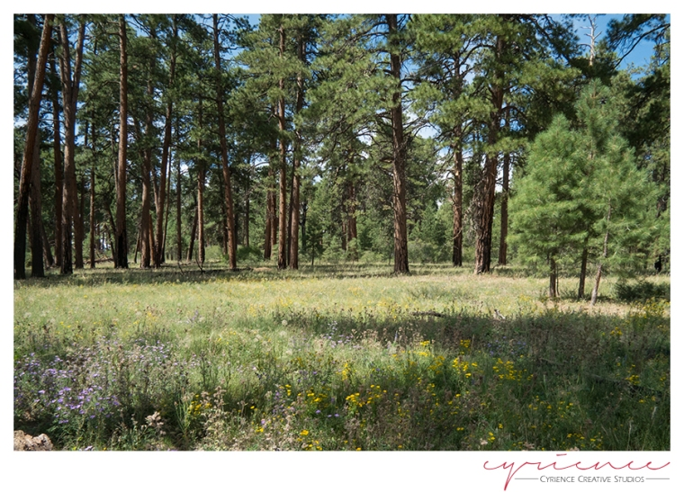 Meadows on Powell Plateau