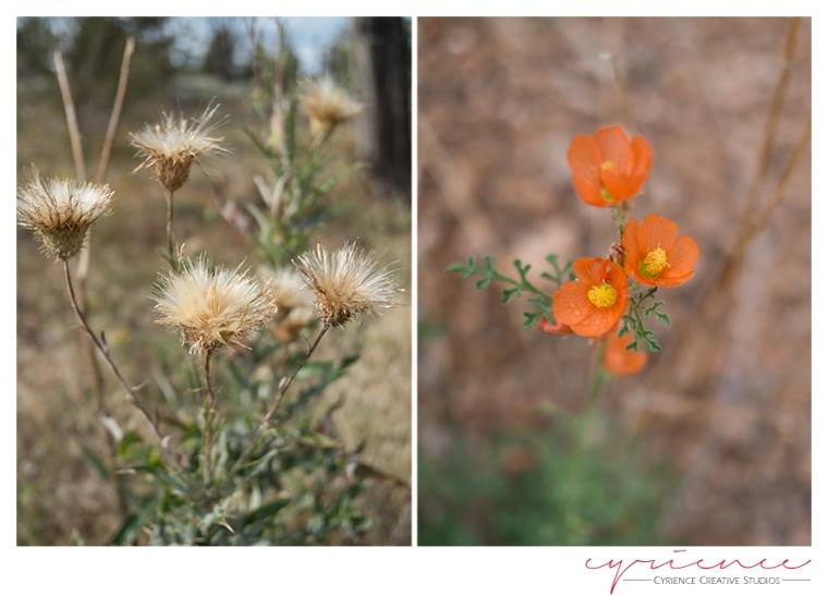 Wild flowers, North Bass Trail, North Rim, Grand Canyon