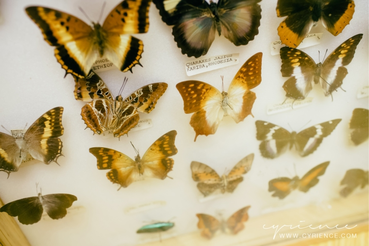 Alfred & Alma's Insect Shoppe, Lifestyle Photography by Cyrience Creative Studios