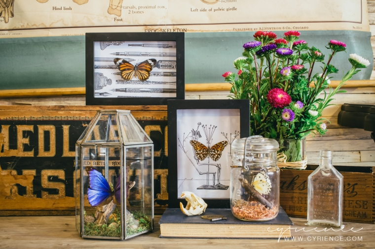 Alfred & Alma's Insect Shoppe decor pieces on sale at Kanibal Home in Jersey City, NJ